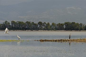 Der Kerkini-See (Stausee)