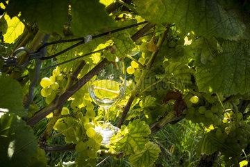 Ein Glas Gutedel Wein in der Sonne