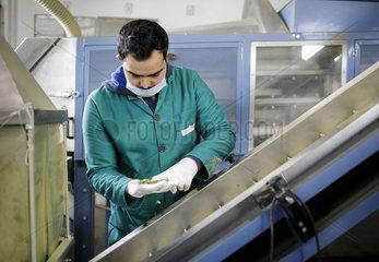Herstellung von Bio-Trockenkraeutern bei der Firma Herbiorech in Tunesien