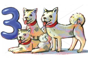 Zahlentiere 3 Hunde Serie