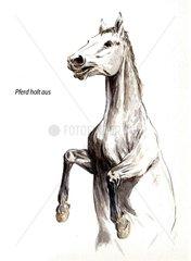 Serie Pferdeverhalten holt aus