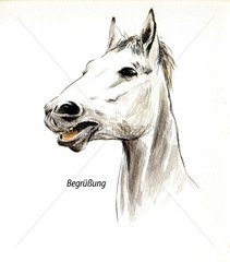 Serie Pferdeverhalten Begruessung