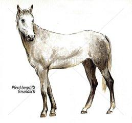 Serie Pferdeverhalten