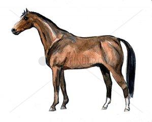 Serie Pferderassen Trakener