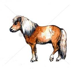 Serie Pferderassen Shetland Pony