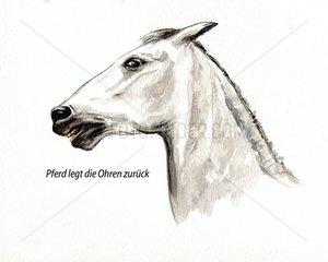 Serie Pferdeverhalten legt Ohren zurueck