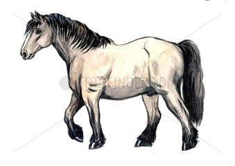 Serie Pferderassen Kaltblut