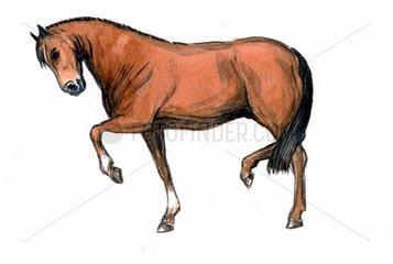 Serie Pferderassen Hannoveraner