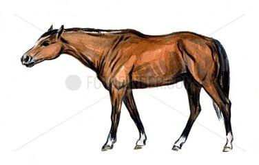 Serie Pferderassen Englisches Vollblut