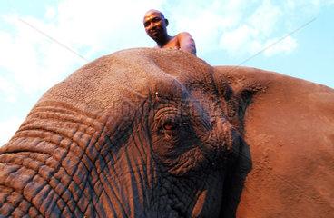 Botswana  Okavango delta  Abu Camp  a mahout joking with Abu