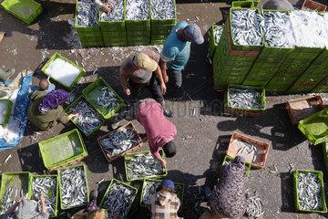 Fischer im Hafen von Essaouira