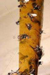 Fliegenpapier