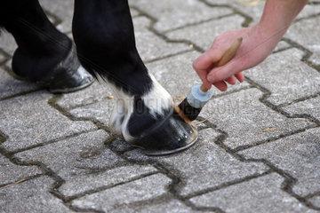 Iffezheim  Huf eines Pferdes wird gefettet