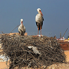 Storks on Ruins of El-Badi Palace - Marrakesh