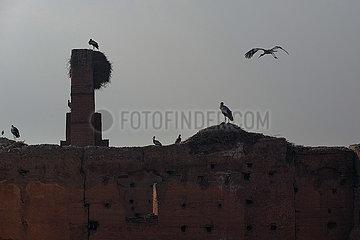 Storks on Ruins of El-Badi Palace - Marrakesh