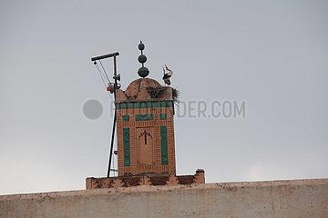 Storks - Marrakesh