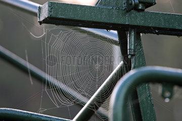 Neuenhagen  Deutschland  Spinnennetz
