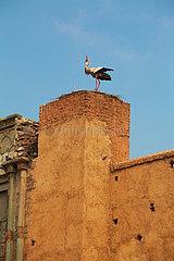Stork - Marrakesh