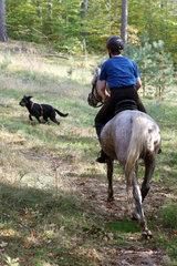 Zernikow  Frau trifft bei einem Ausritt im Wald auf einen freilaufenden Hund