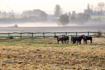 Gestuet Goerlsdorf  Pferde stehen am Morgen auf der Weide