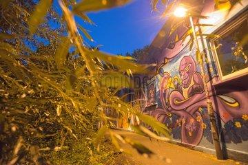 Graffiti in light and dark