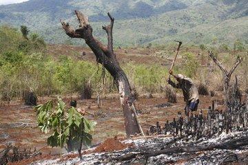 Brandrodungsfeldbau in den Kachin Bergen