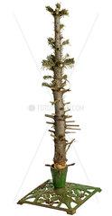 abgeholzter Christbaum