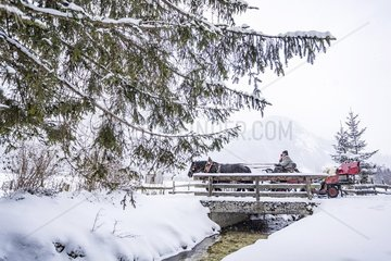 Pferdeschlittenfahrt in den Alpen