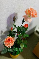 Sangerhausen  Deutschland  kuenstliche Rosen in einem Topf als Deko in einer Pension