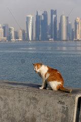 Doha  Katar/ Qatar