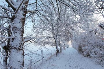 Flensburg  Deutschland  winterliche Landschaft