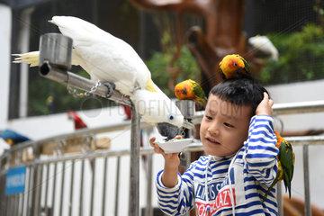 CHINA-CHONGQING-PARROT GARDEN-OPEN (CN)