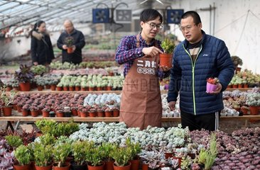 CHINA-HEBEI-SUCCULENT PLANTS (CN)