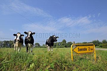 Soerup  Deutschland  Kuehe und laendliche Idylle auf einem Feld vor dem Schild Seende