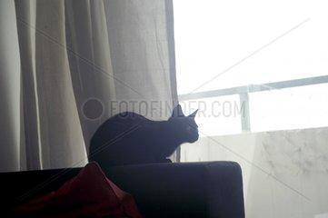 Katze beobachtet Sofa Ausschau