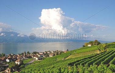 Weinort Cully am Genfersee