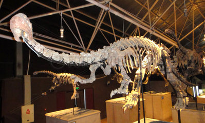 CHINA-YUNNAN-LUFENG-NEW DINOSAUR SPECIES-DISCOVERY (CN)