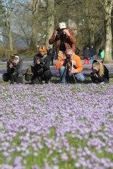 Husum  Deutschland  Krokusblueten im Husumer Schlosspark