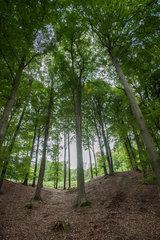 Albersdorf  Deutschland  Mischwald mit Buchen