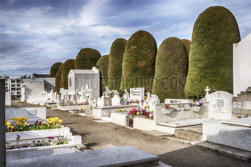 Friedhof Sara Braun