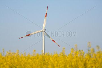 Hasenholz  Windkraftrad und Rapsfeld