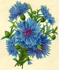 Kornblumen  Poesiebild  1881