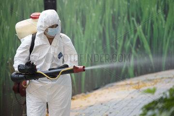 Hong Kong  China  Mann versprueht Pestizide