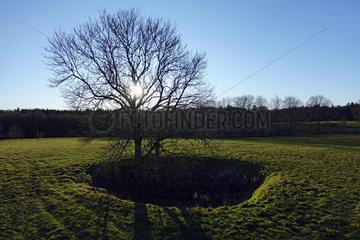 Neu Kaetwin  Deutschland  Baum steht in einem trockenen Toteisloch