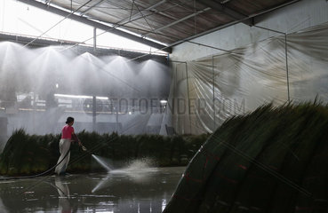 CHINA-SICHUAN-BUSINESS-SOFT RUSH-WEAVING MATERIAL-PRODUCTION (CN)
