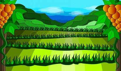 Weinberg Vineyard Landschaft Landscape Traube Grape