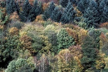 Mischwald im Herbst