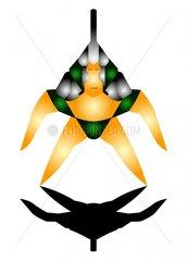 Krieger Sternenkrieger Star Warrior Sci-Fi Avatar