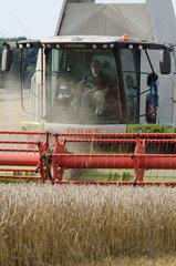 Altenkrempe  Deutschland  Weizenernte beim Gut Sierhagen bei Neustadt