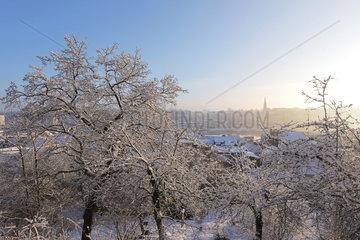 Flensburg  Deutschland  winterliche Landschaft im Park am Rummelgang